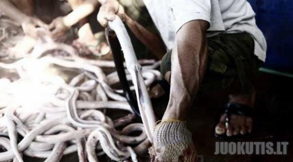 Skanusis mėsainis iš Indonezijos