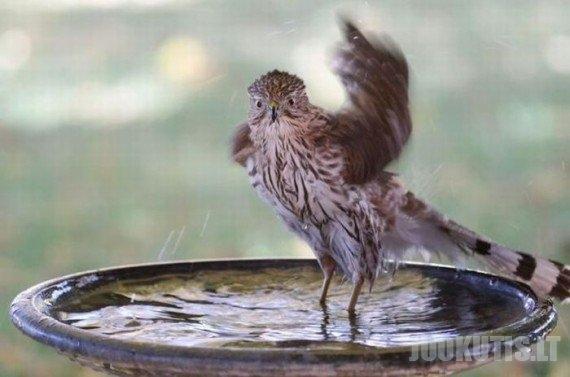 Šokis fontane