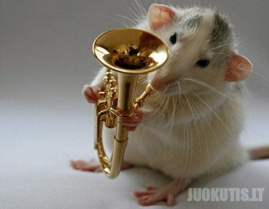 Muzikantas