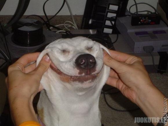 Juokingi šunys (14 nuotraukų)