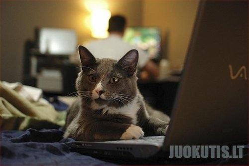 Hakeriai (24 nuotraukos)