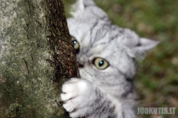 Nauja žvaigždė internete - storas katinas Julija (19 nuotraukų)