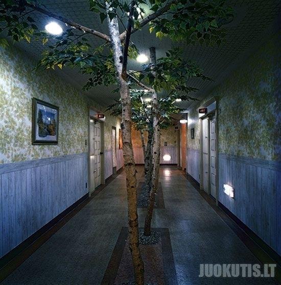 Taip atrodo japonų viešnamis (13 nuotraukų)