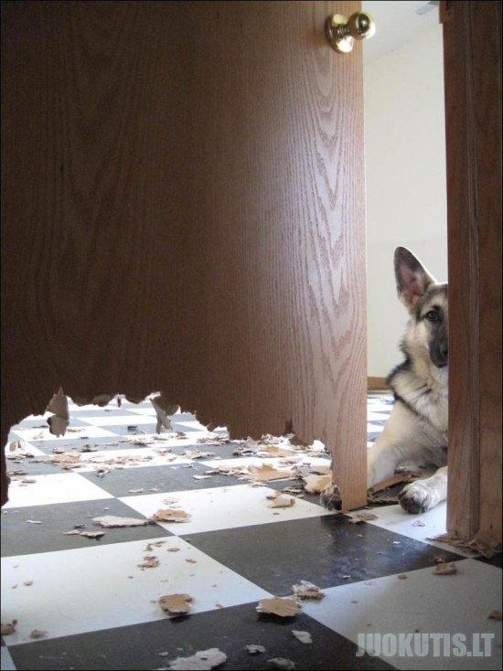 Kas yra geras šuo (2 nuotraukos)