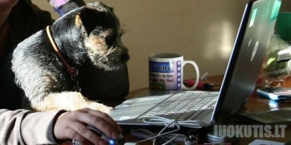 Kompiuteris ir šuo: du neatskiriami dalykai (34 nuotraukos)