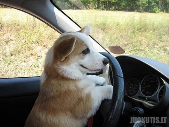 Žavingas šuniukas (12 nuotraukų)