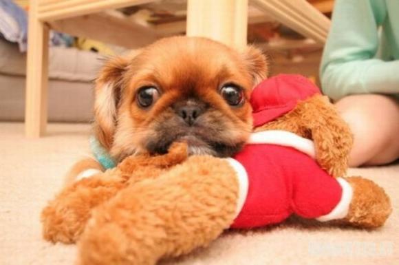 Mažylis nori žaisti, o ne miegoti :) (11 nuotraukų)