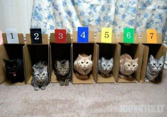 Organizuotos katės (14 nuotraukų)