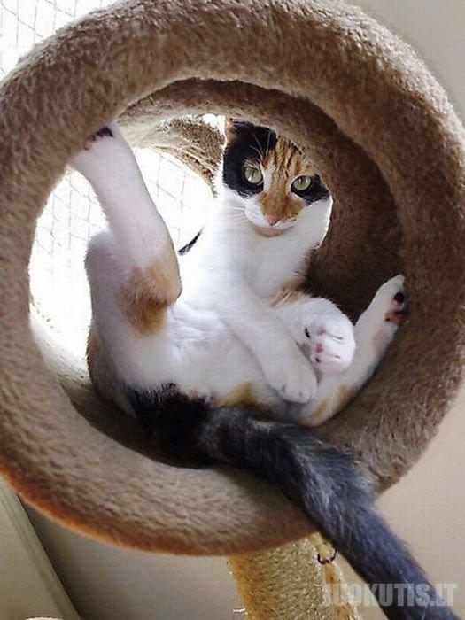 Įdomios kačių nuotraukos (49 nuotraukos)