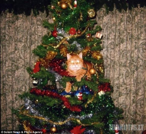 Kaip Tomas ir Džeris Kalėdas švenčia :D (2 nuotraukos)