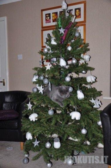 Eglutė + katė = ?  (20 nuotraukų)