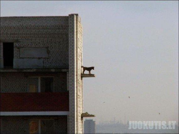 Šuo - ekstremalas (3 nuotraukos)