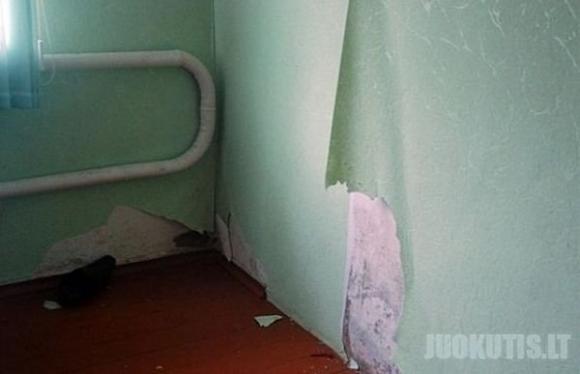 Haskis Jūsų bute (139 nuotraukos)