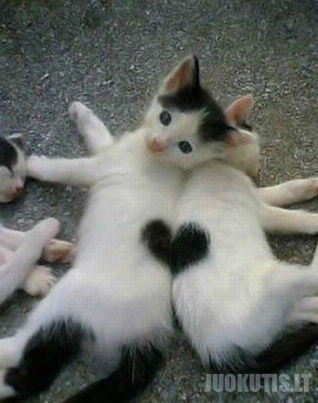 Katės ir širdelės