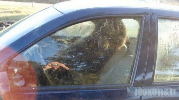 Meškutė mašinoje ir jos siurprizas (3 nuotraukos)