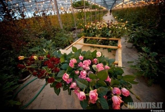 Gėlių šventė