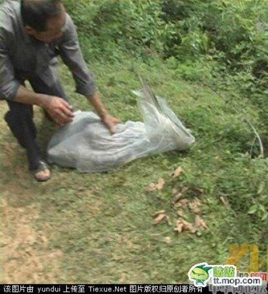 Gyvačių gaudytojas - labai pavojinga profesija
