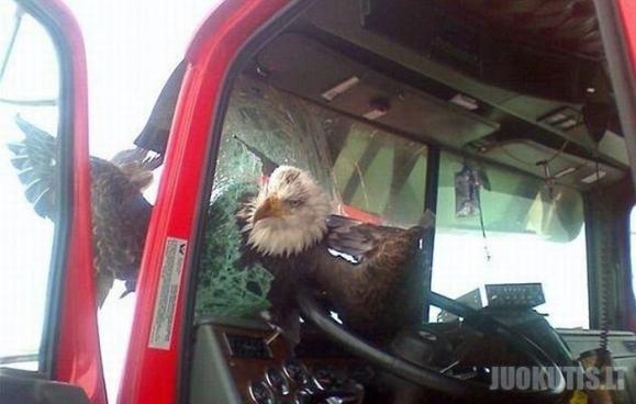 Sužeistas paukštis