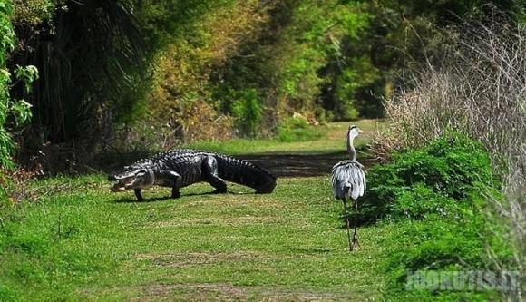 Krokodilas vs Paukštis = ?