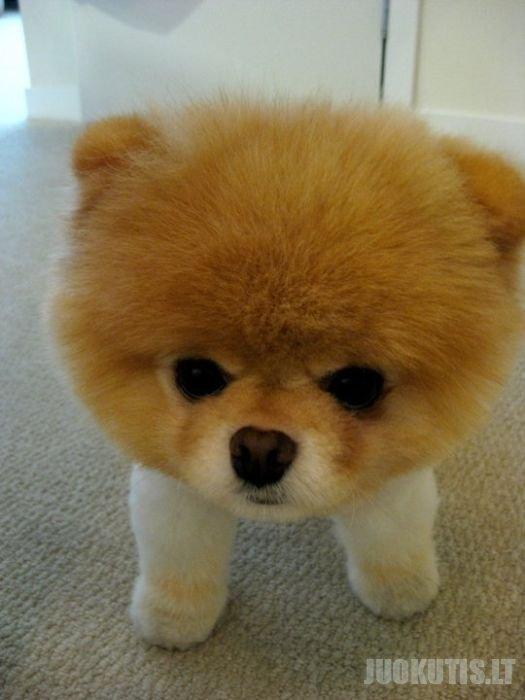 Populiariausias Facebook šuniukas