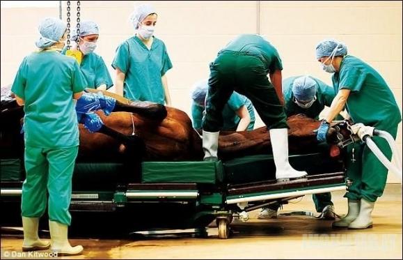 Arklių ligoninė