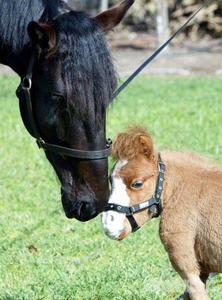 Nykštukinys arkliukas