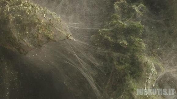 Pakistaną užpuolė vorai
