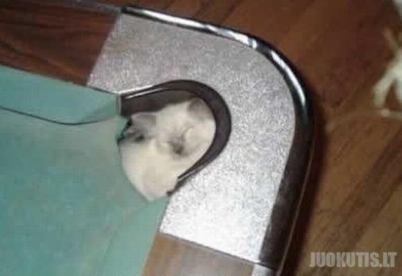 Katinai irgi mėgsta biliardą