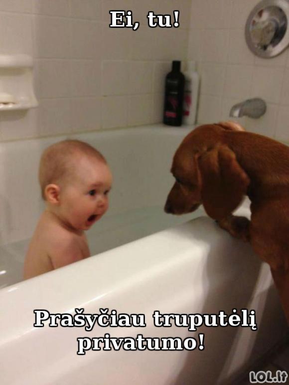 Šiam šuniui ant privatumo nusispjaut