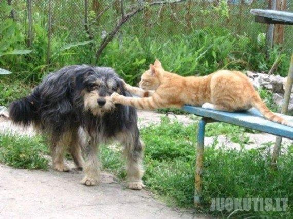 Katinai ir šunys