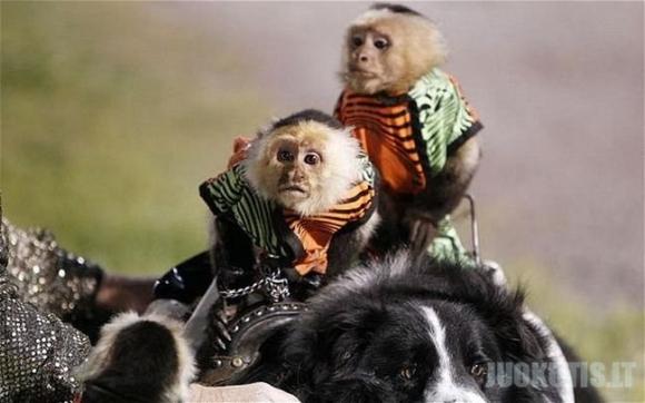 Beždžionėlės raitelės