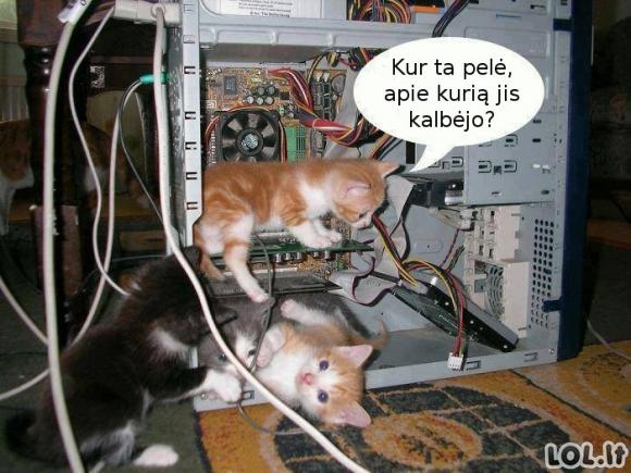 Kas nup**o pelę?!