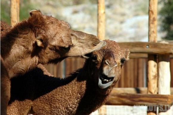 Kokie kupranugariai yra iš tikrųjų ?