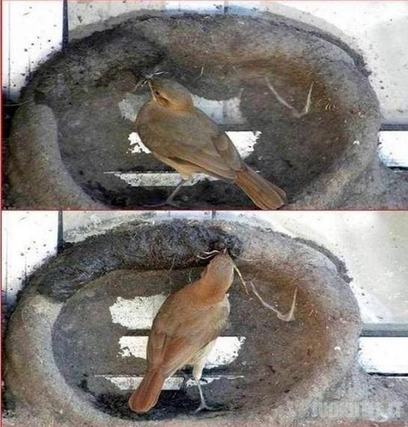 Paukščiukų namai