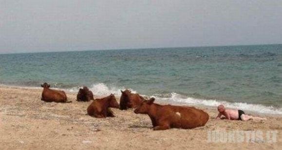 Paplūdimių poilsiautojai