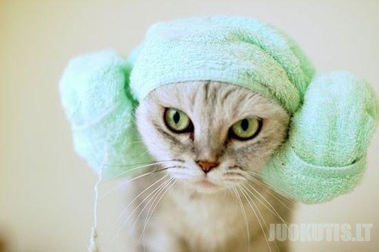 Katinėliai įvynioti į rankšloščius