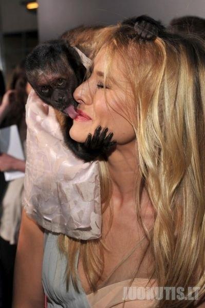 Ką renkasi moteris.Laižiaką su beždžionėle ar su vyru?