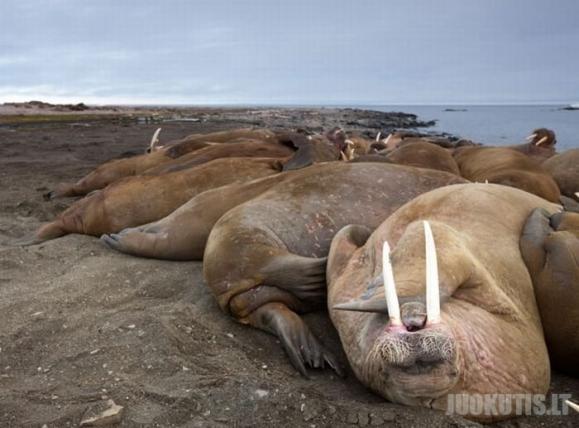 Pasiplaukiojimai su jūrų vėpliais