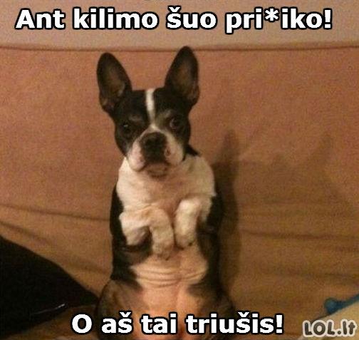 Šuns atmazas