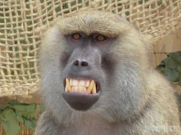 Nuotrauka su beždžione