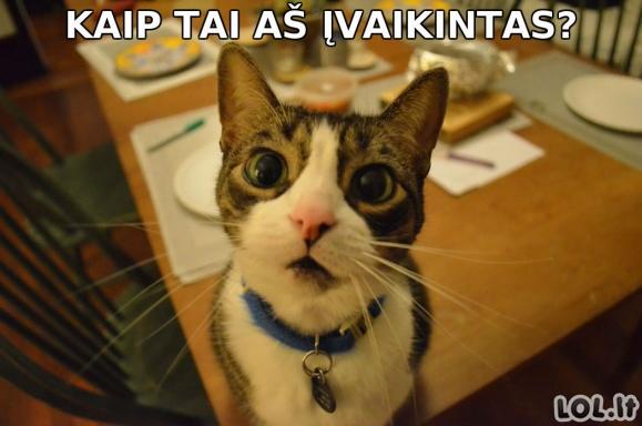 Žinia, sukrėtusi katino pasaulį