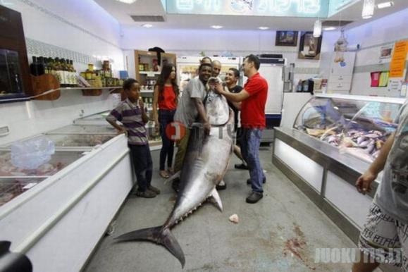 Labai didelis tunas