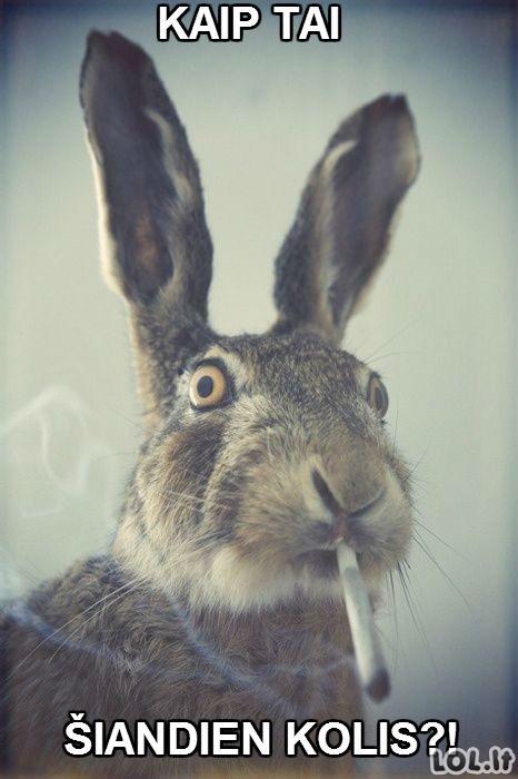 Kaip atrodo už kampo rūkantys mokinukai?