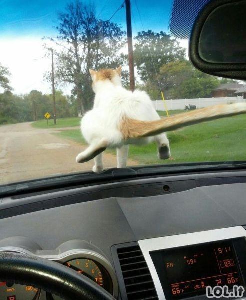 Juokingi automobilių paveiksliukai [15 foto]
