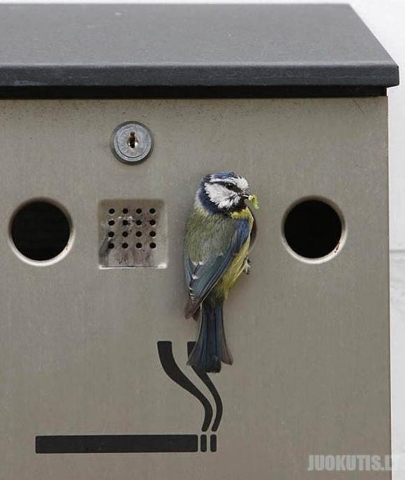 Paukščių lizdai netikėčiausiose vietose
