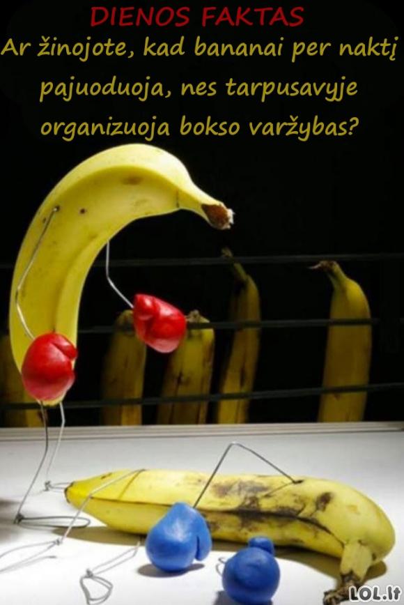Ką naktimis veikia bananai?