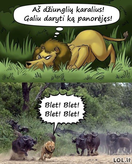 Džiunglių karalius ši*a į kelnes