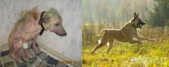 Gyvūnai, kurių nemylėjo šeimininkai