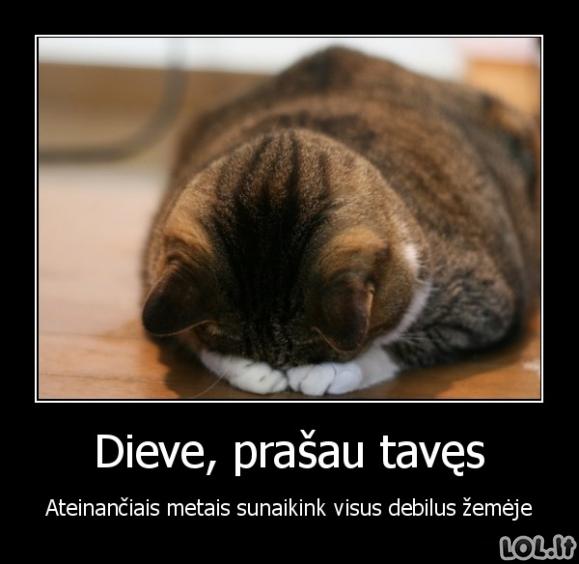 Katinuko malda