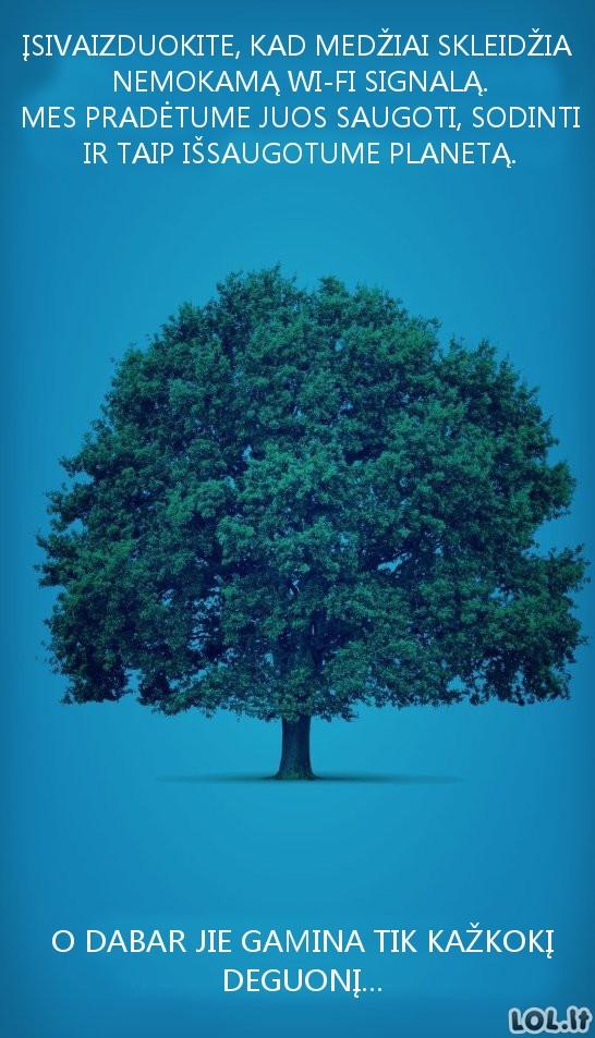 Kaip išsaugoti medžius?